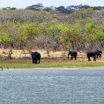 Elefanten am Lifupa See