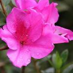 Rose Gardens Homestay Foto