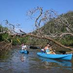 Kanufahren durch die Mangroven