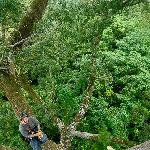 Foto de Tropical Tree Climbing - Day Tour