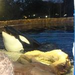 Seaworld - Dine with Shamu - Must Do!
