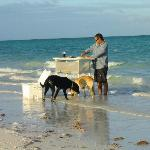 Fish cleaning Andros-Style -- Jesse with the dogs, Duke and Riley