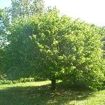 tree of beau séjour