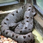 Monteverde Serpentarium 1