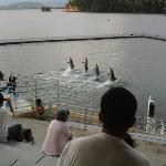 dolphins walk