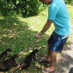 wild life in costarica