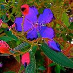 Purple and Red Flowers in bloom at Casa Grande in January
