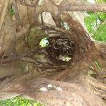 el tour al árbol hueco