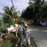 A coconut stop