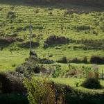 view from our window @ Dunroman House, Doolin.  Very nice place to stay and Martina was an aweso