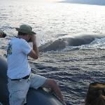 Whale by Boat