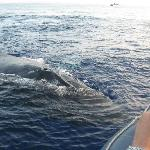 Another whale by the boat