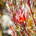 Foto UCSC Arboretum