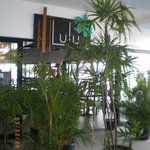 Lulu Bar Cafe & Restaurant