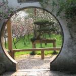 Moongate frames bonsai.