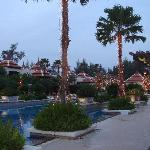 The palm trees around the pool
