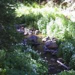 Creek on Grand Mesa