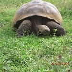 reserva de tortugas