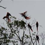Papagos en Villas Gaia