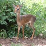 Dik Diks patrol the grounds.