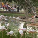 riyadh zoo 5