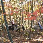 The horses from our stables can be seen crossing the bottom of the yurt village property several