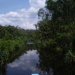"the clean ""black water"" in the jungle"