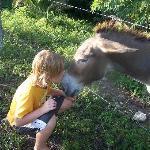 Love the donkeys