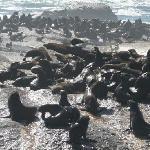 Robben-Insel