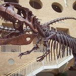 Fernbank Museum of Natural History Photo