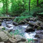 Bilde fra Amicalola Falls State Park