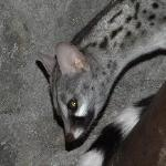 One of the Resident Genets checks your Bar bill.