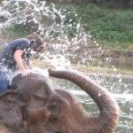 Elephant rider .... aaaah