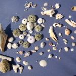 Excellent Shelling at Coral Cove