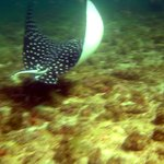 Tüplü Dalış ve Şnorkelle Dalış