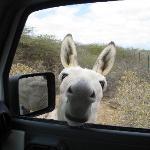 Donkey @ Sanctuary