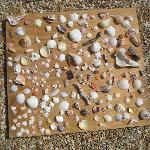 a few shells
