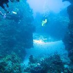 divers exploring
