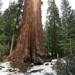 Sequoia Sightseeing Tours