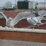Local Birds