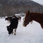 馬と牛たち