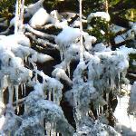 Leaves frozen by the fountain in Kenrokuen