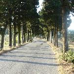 Road behind Fattoria Lavacchio