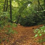 Autumn Woods Nearby