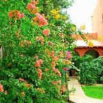 Beautiful fragrant garden