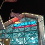 Aquarium, it was well worth the trip! kids & we loved it!