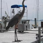 Bird on the dock