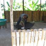 Making cassava bread, Carib Territory