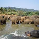 Elephant Orphanage, about an hour from Kandy