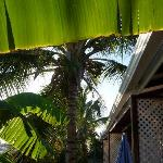 Coconut palm shading the veranda